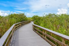 Anhinga Trail of the Everglades National Park. Boardwalks in the swamp. Florida, USA royalty free stock photos
