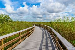 Anhinga Trail of the Everglades National Park. Boardwalks in the swamp. Florida, USA stock photo