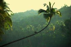 Anhinga in una giungla Fotografia Stock