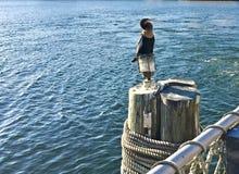 Anhingavogel, der auf Pier durch See stillsteht Stockbilder