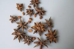 Anice stellato e semi secchi Immagine Stock