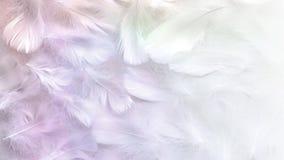 Anielski pastel zabarwiający Białego piórka tło obrazy royalty free
