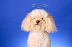 Anielski Pies Zdjęcie Royalty Free