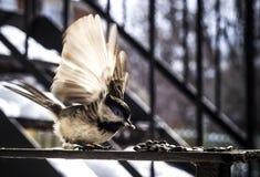 Anielski ptak w ruchu obrazy stock