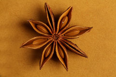 Anijsplant - ster gevormd Indisch kruid Royalty-vrije Stock Foto