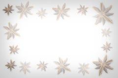 Anijsplantster royalty-vrije illustratie