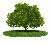 Anillo de árbol del verde de hierba Foto de archivo
