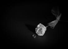 anillo de bodas del oro exhibido con una rosa del blanco de la tela Foto de archivo libre de regalías
