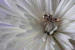Anillo de bodas en el aster blanco Fotos de archivo
