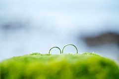 Anillo de bodas en verde con el fondo de la playa Fotografía de archivo libre de regalías