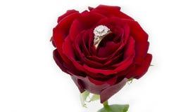 Anillo de diamante en una Rose Imagen de archivo libre de regalías
