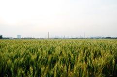 Anillo de los campos de trigo por las fábricas Fotografía de archivo libre de regalías