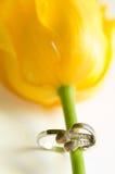 Anillo de oro blanco y tulipán amarillo Imágenes de archivo libres de regalías