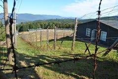 Anillo del alambre de púas de la crueldad Foto de archivo