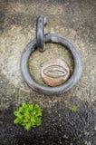 Anillo del amarre y planta verde en el hormigón Fotos de archivo libres de regalías