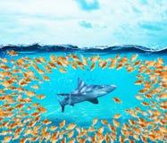Anillo del grupo de los peces de colores el tiburón El concepto de unidad es fuerza, trabajo en equipo y sociedad foto de archivo libre de regalías