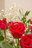 Anillo en la Rose Imagen de archivo libre de regalías