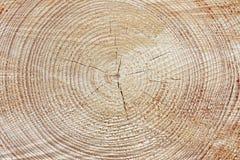 Anillos de árbol Fotografía de archivo libre de regalías