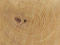 Anillos de árbol Foto de archivo libre de regalías