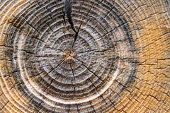 Anillos de árbol Imagenes de archivo