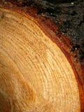 Anillos de árbol Fotos de archivo