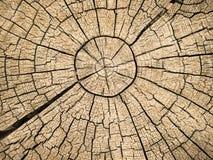 Anillos de árbol con las grietas Imagen de archivo libre de regalías