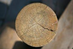 Anillos de árbol de madera Imagen de archivo