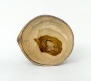 Anillos de árbol de madera seccionados transversalmente del grano Foto de archivo libre de regalías