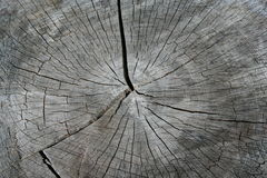 Anillos de árbol de un tocón Fotos de archivo libres de regalías