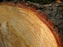 Anillos de árbol (horizontales) Fotografía de archivo
