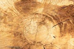Anillos de árbol de madera agrietados de la textura Corte la rebanada del registro del árbol Imagenes de archivo