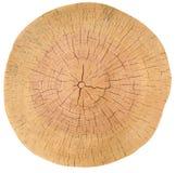 Anillos de árbol, madera, registro Textura de madera Foto de archivo