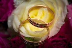 Anillos de bodas del oro en la flor. Fotografía de archivo