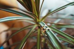 Anillos de bodas del oro en la planta verde hermosa Foto de archivo