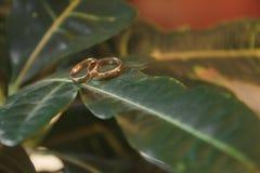 Anillos de bodas del oro en la planta verde hermosa Imagen de archivo libre de regalías