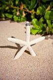 Anillos de bodas en estrellas de mar Imagen de archivo libre de regalías