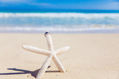 Anillos de bodas en estrellas de mar Fotos de archivo libres de regalías