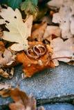Anillos de bodas en fondo del follaje del otoño Fotografía de archivo