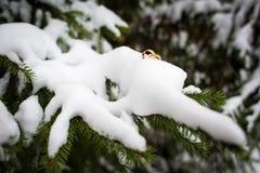 Anillos de bodas en la nieve en una rama de la picea Boda del invierno imagenes de archivo