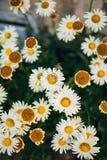 Anillos de bodas en las flores Foto de archivo libre de regalías