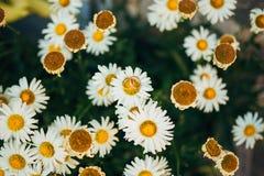 Anillos de bodas en las flores Foto de archivo