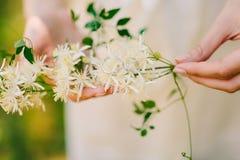 Anillos de bodas en las flores del jazmín en las manos del brid Imagen de archivo libre de regalías