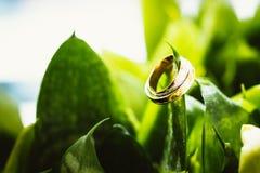Anillos de bodas en las flores verdes Imágenes de archivo libres de regalías