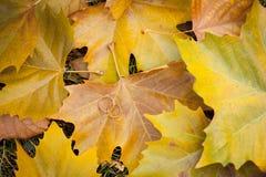 Anillos de bodas en las hojas de otoño amarillas Fotos de archivo