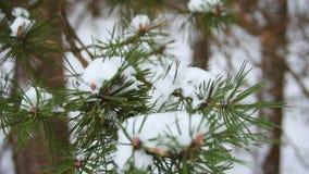 Anillos de bodas en rama verde en la nieve, foco selectivo Cierre para arriba Cámara lenta almacen de metraje de vídeo