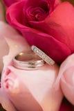 Anillos de bodas en rosas Fotos de archivo libres de regalías