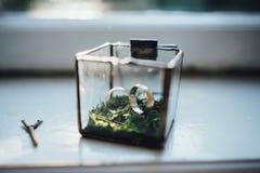 Anillos de bodas en una caja de cristal Imagen de archivo libre de regalías