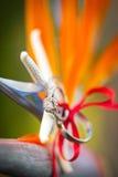 Anillos de bodas tropicales Imagenes de archivo