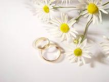 Anillos de bodas y manzanilla Fotos de archivo libres de regalías