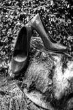 Anillos de bodas y zapatos de las mujeres en un tocón Foto de archivo